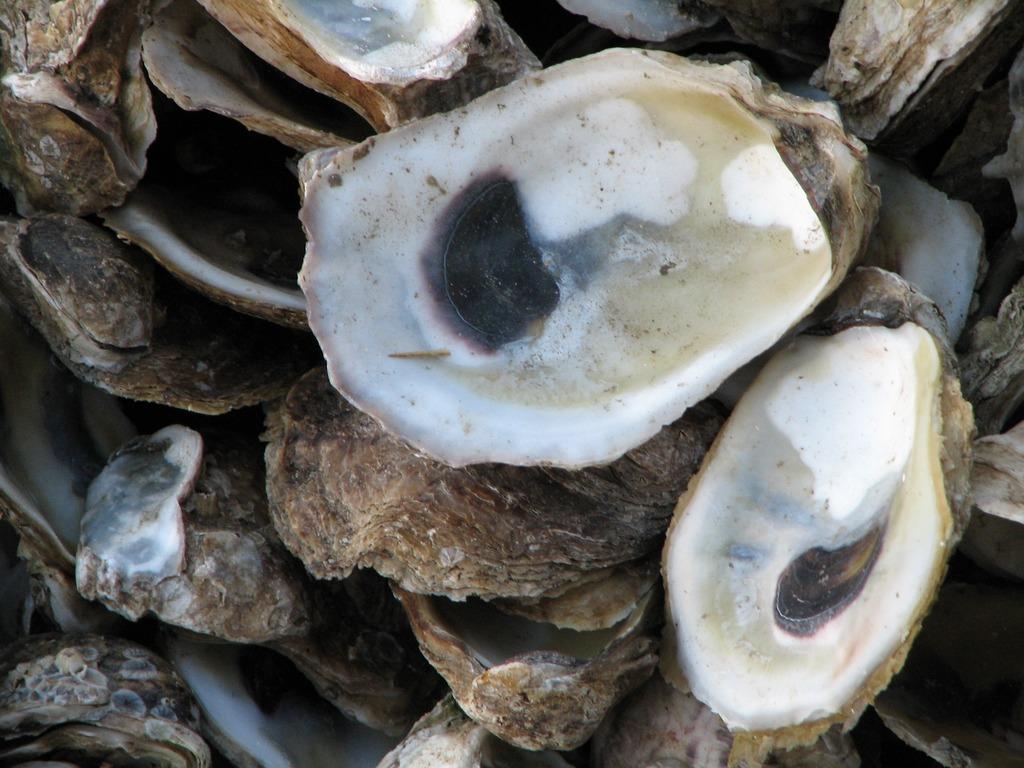 Les huîtres du pays des Marennes-Oléron